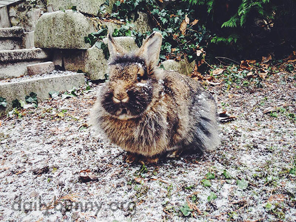 Bunny Sits in a Dusting of Snow and Tastes a Snowy Leaf 1
