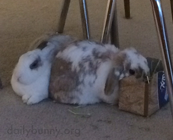 Bunny Sneaks Some Hay When His Friend Isn't Looking