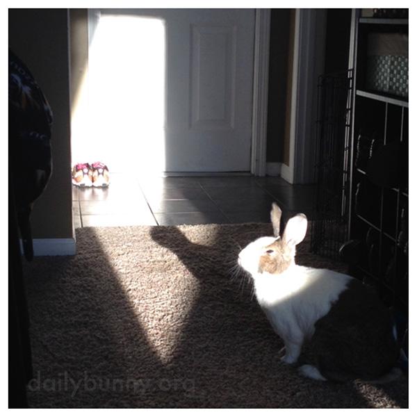 Bunny Soaks Up a Sunbeam