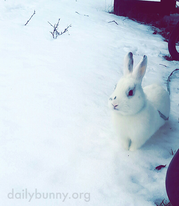 Bunny's First Snow Experience 1