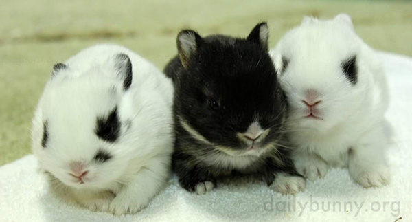 Tiny Bunnies Line Up in a Row