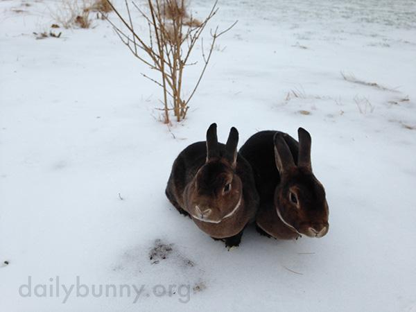 Bunnies Get Treats in the Snow 1