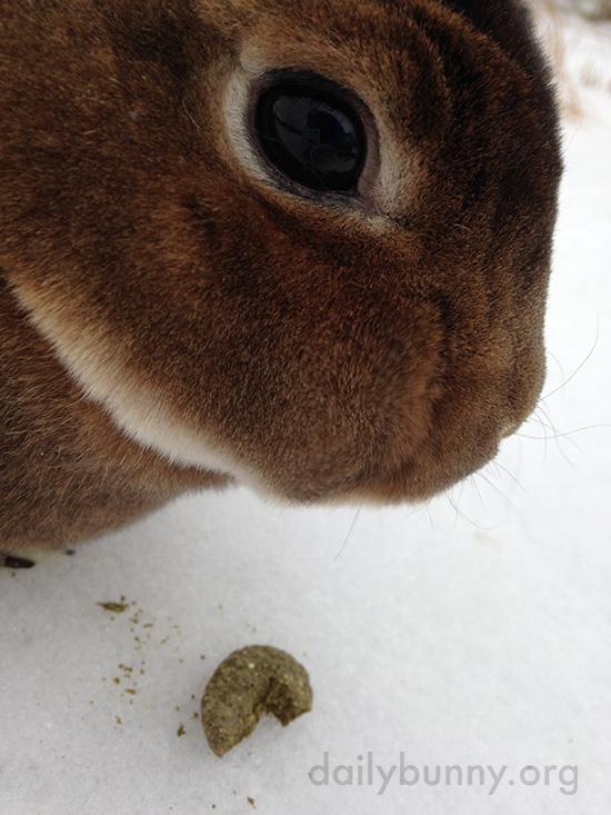 Bunnies Get Treats in the Snow 2