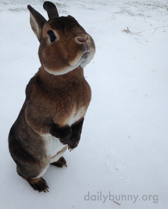 Bunnies Get Treats in the Snow 3