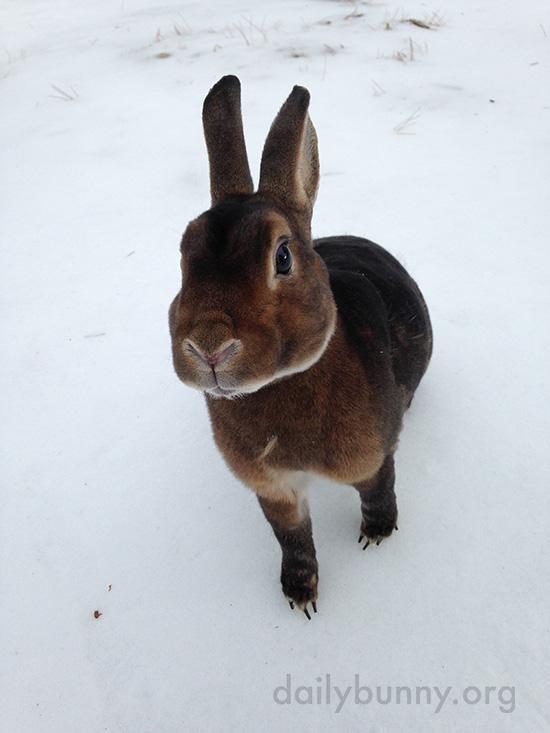 Bunnies Get Treats in the Snow 5