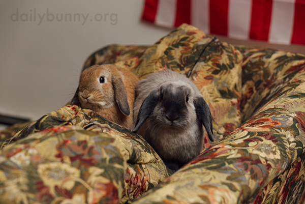 Bunnies Have Found a Very Comfy Vantage Point for Human Watching