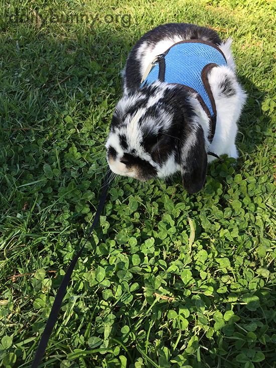 Bunny Enjoys the Greenery and the Lack of Snow