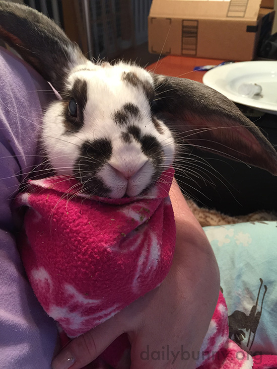 Bunny Gets Burritoed for Medicine Time