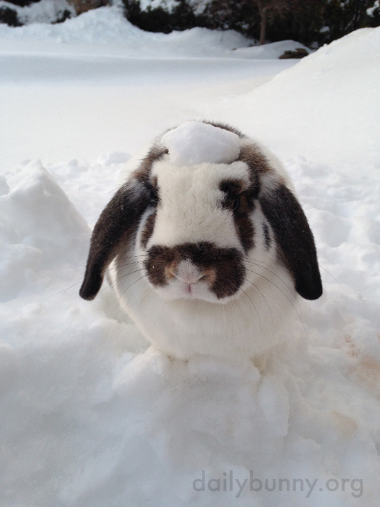 Bunny Gets in Some Play Time in the Snow 2