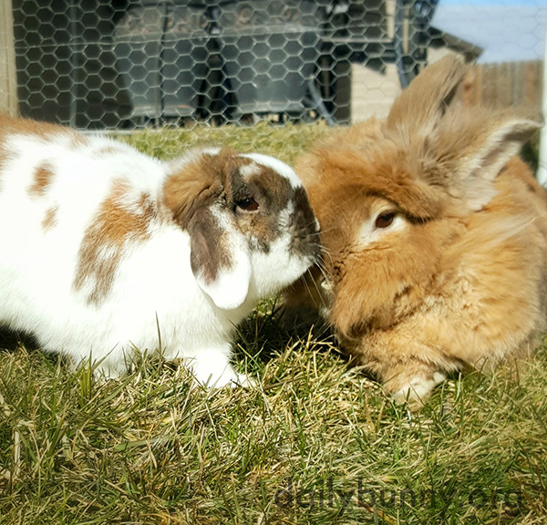 Bunny Gives Her Bonded Friend a Little Kiss