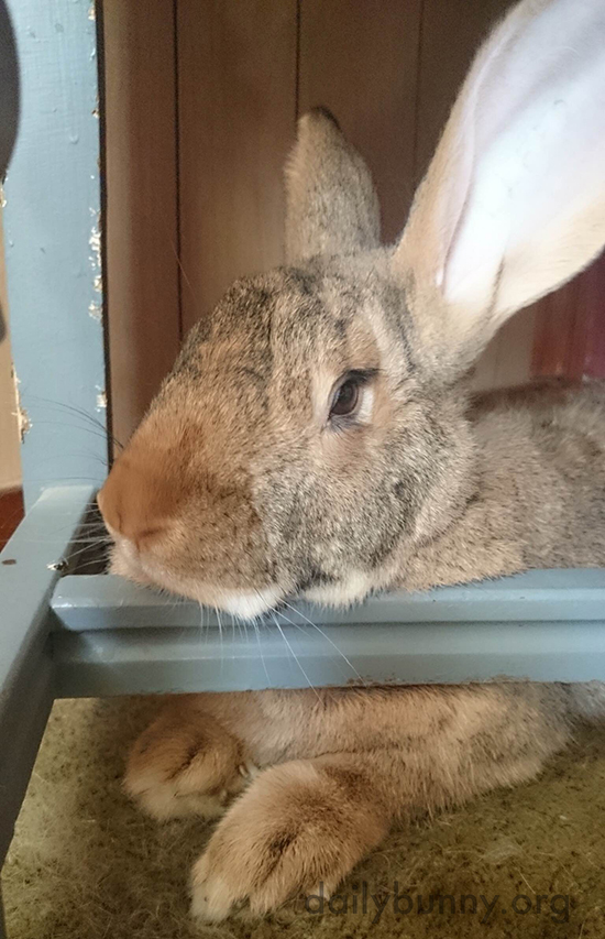 Bunny Has Found an Excellent Chinrest