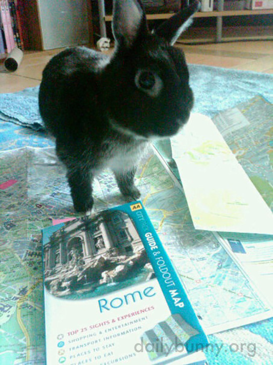 Bunny Helps Human Plan a Roman Holiday