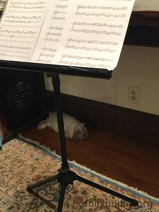 Bunny Relaxes and Enjoys a Private Concert