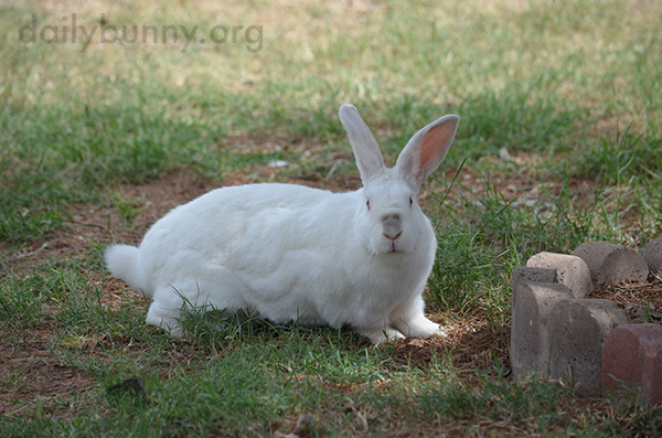 Bunny Stretches His Legs Outside