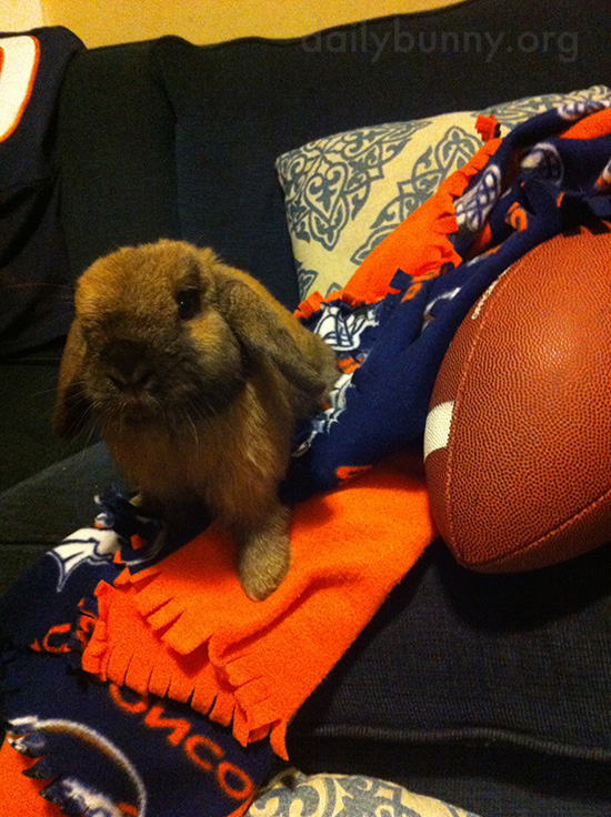 Bunny's Ready to Root on Her Team in Today's Game 1