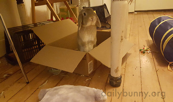 Come On, Human, Get in the Box and Let's Play!