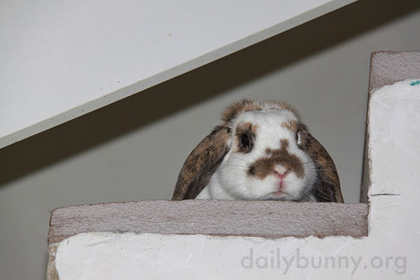 Things Look Different from Up There, Don't They, Bunny?