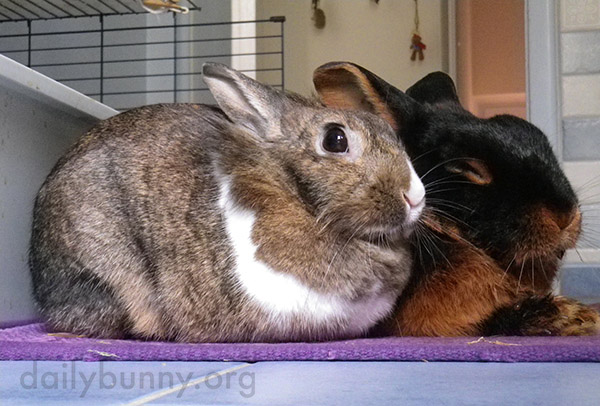 Bunnies Have a Best Friend in Each Other 1