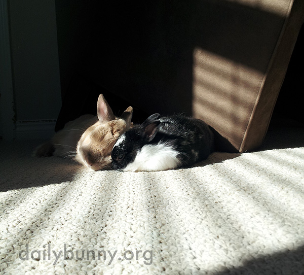 Bunnies Snuggle Up in a Sunbeam