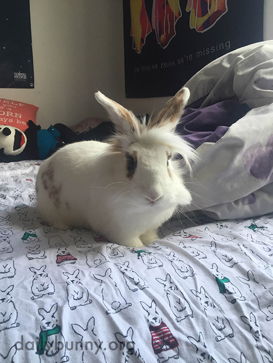 Bunny Approves of Human's Taste in Bedding 1