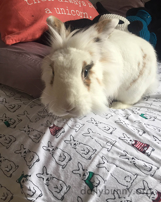 Bunny Approves of Human's Taste in Bedding 2