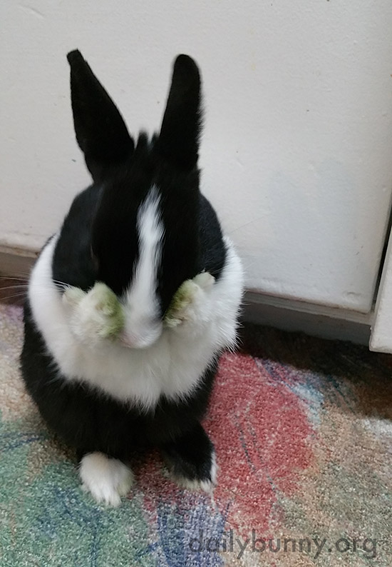 Bunny Comes to the Stark Realization She Has Eaten All Her Greens 2