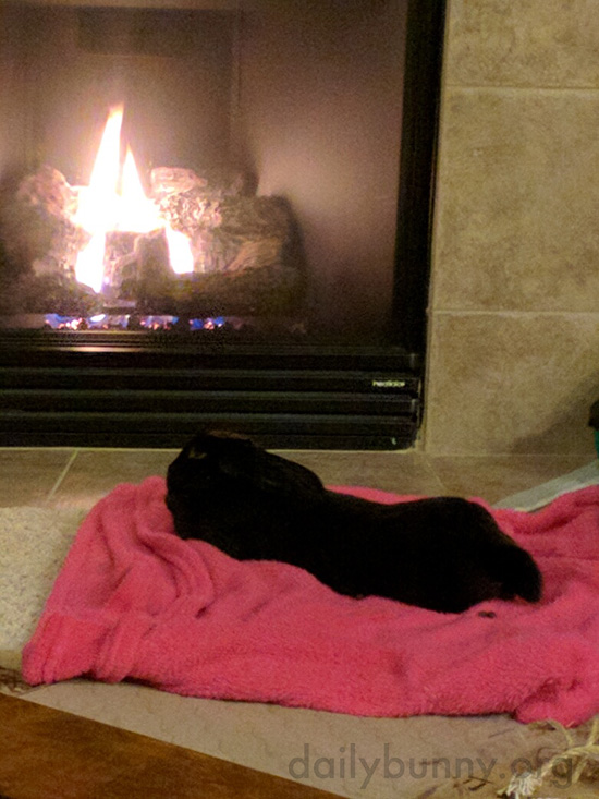 Bunny Cozies Up in Front of the Fireplace