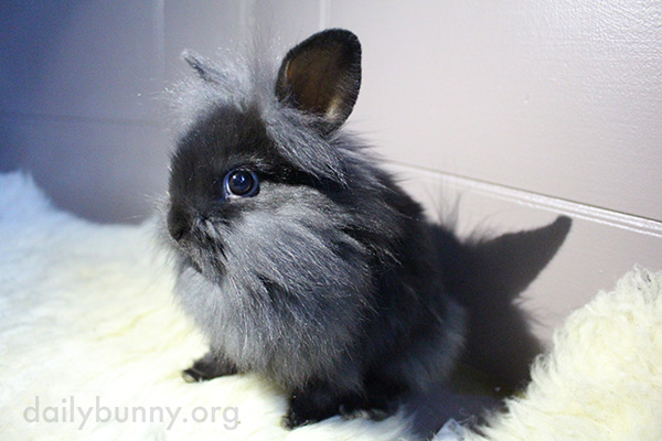Bunny Is Bright-Eyed and Bushy-Faced