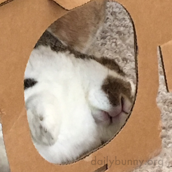Bunny Is Fast Asleep in the Shelter of His Castle