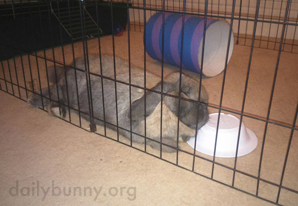 Bunny Is So Tired He Fell Asleep on His Bowl 1