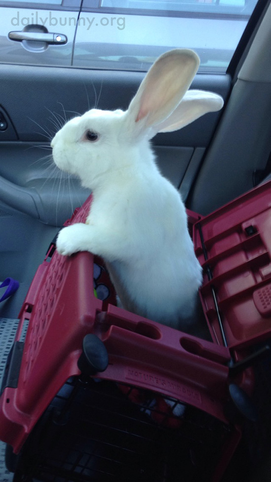 Bunny Is Such a Backseat Driver