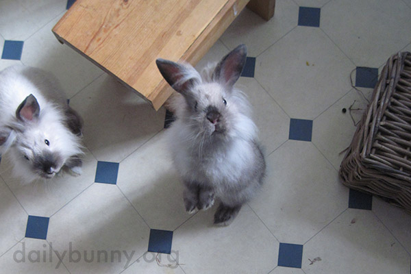 Bunny Looks So Hopeful That Human Might Have a Treat 1