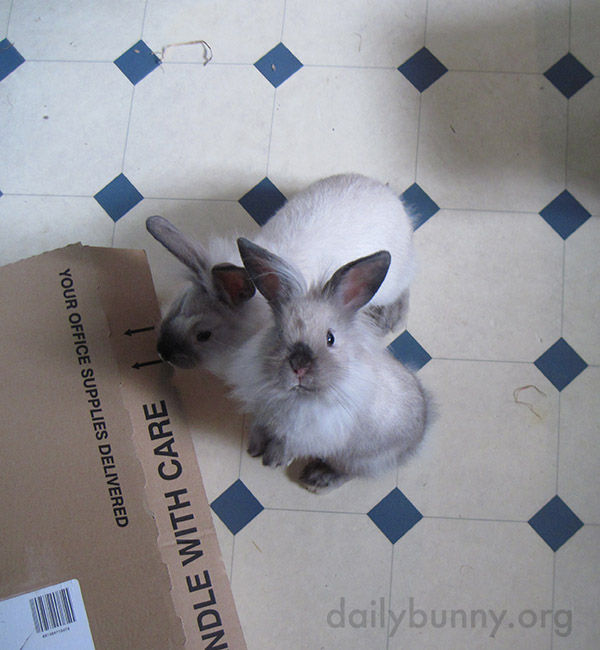 Bunny Looks So Hopeful That Human Might Have a Treat 2