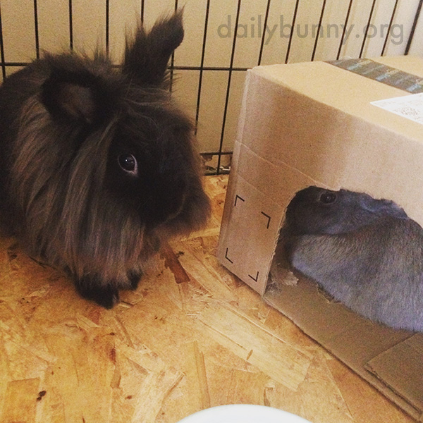 Bunny Takes a Turn in Her Friend's Shelter 1