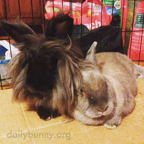 Bunny Takes a Turn in Her Friend's Shelter 2
