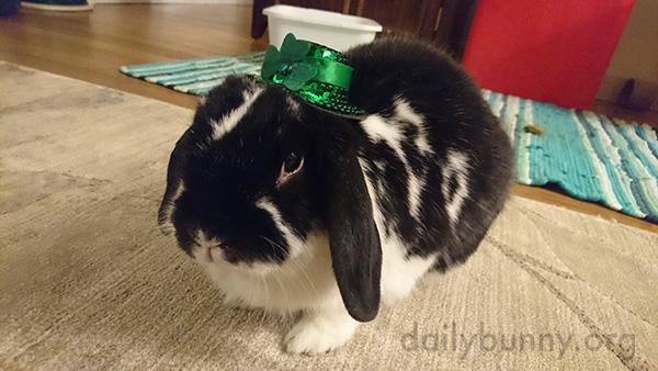 Bunny Wears a Tiny St. Patrick's Day Hat 1
