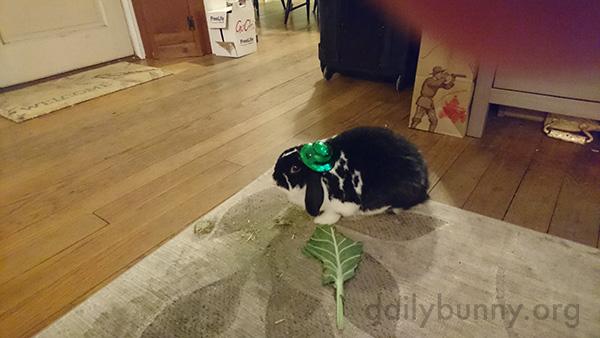 Bunny Wears a Tiny St. Patrick's Day Hat 2