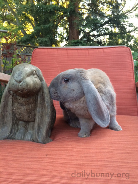 Bunny's Not Sure What to Make of the New Guy 1