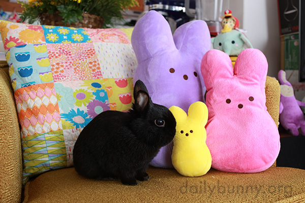 It's the Daily Bunny's Easter 2016 Mega-Post! 1