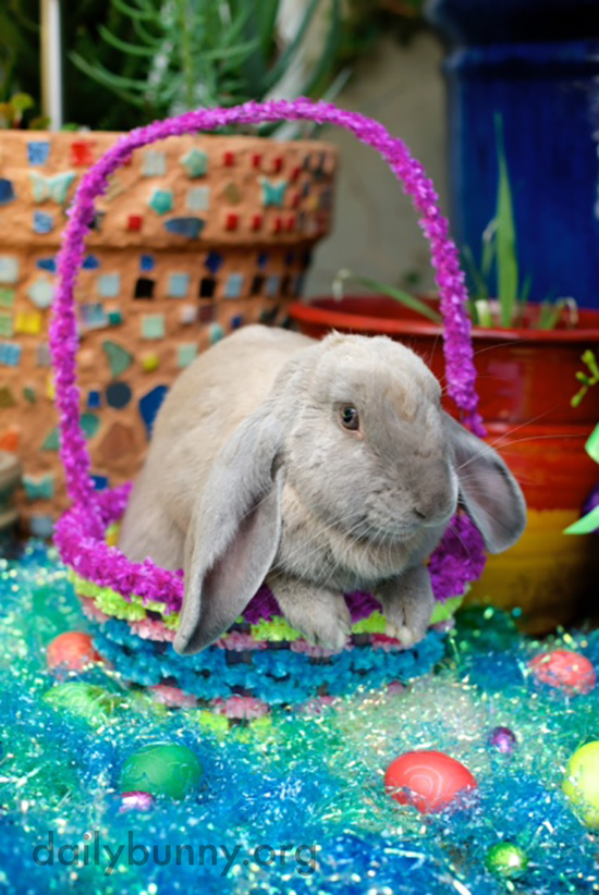 It's the Daily Bunny's Easter 2016 Mega-Post! 2