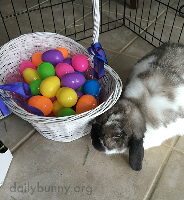 It's the Daily Bunny's Easter 2016 Mega-Post! 5
