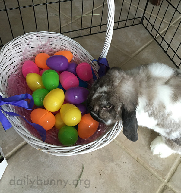 It's the Daily Bunny's Easter 2016 Mega-Post! 6