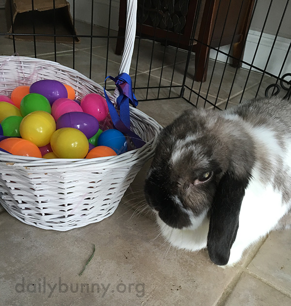 It's the Daily Bunny's Easter 2016 Mega-Post! 7