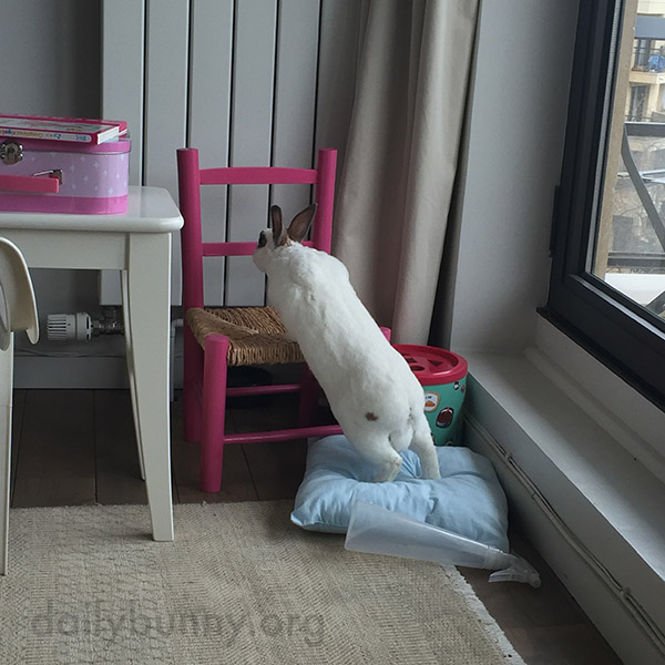 These Chairs Are Almost Bunny-Sized! 2