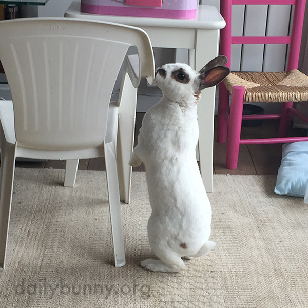 These Chairs Are Almost Bunny-Sized! 4