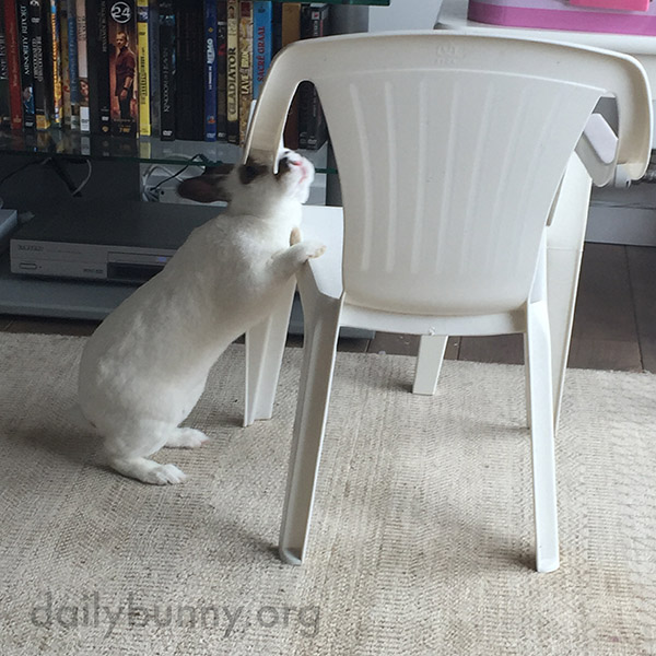 These Chairs Are Almost Bunny-Sized! 5