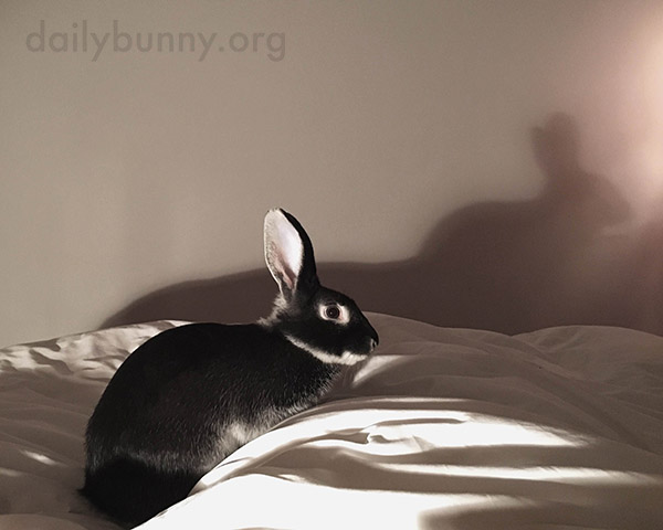 Who Needs Hands When Bunny Can Cast the Best Rabbit-Shaped Shadow Puppet?