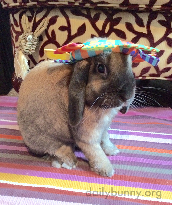 A Toy Makes a Festive Hat for Bunny 2