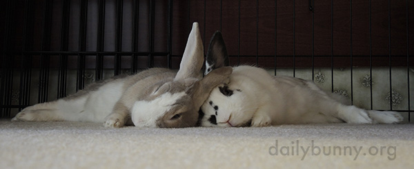 Bunnies Can Always Lean on Each Other 2