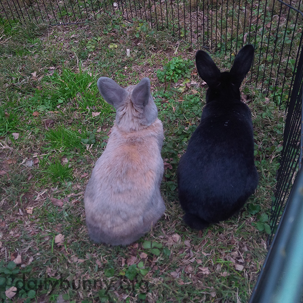 Bunnies Gaze into the Distance Together